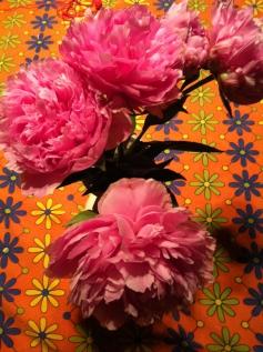 Rosepink peonies